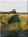 TG2337 : Walking north from Winspurs Farm by Zorba the Geek