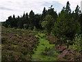 NZ6206 : Moor's edge by Stephen McCulloch
