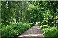 TL9193 : Peddars Way at Hockham Heath by Bob Jones
