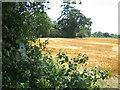 TL1245 : Sweetbrier Farm from Greensand Ridge Walk footpath by ian saunders