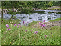 NY9027 : River Tees by William Metcalfe
