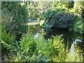 J1584 : Summer foliage by Kay Atherton