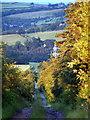 NZ0358 : Wheelbirks Lane by Clive Nicholson