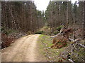 NZ0295 : Storm damage in Harwood Forest by Kenneth   Ross