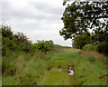 SK7096 : Cow pastures lane. by Steve  Fareham
