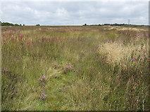 SJ9248 : Wetley Moor by Jonathan Billinger