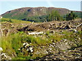 NX5775 : Clear Fell, Galloway Forest Park. by Bob Peace