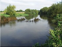 SZ1394 : River Stour looking North by Mike Smith