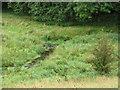 SD9557 : Marshy ground around Hetton Beck by Stephen Craven