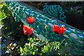 SH5038 : Pabïau - Poppies by Alan Fryer