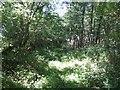 SO6390 : Footpath through Lightwood Covert by John M