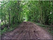 SU1789 : Kingsdown Lane by Damon Knight
