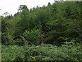 SJ2434 : Craignant  Wood by John Haynes
