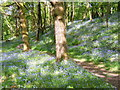SD2296 : Bluebell wood near Seathwaite by Andrew Hill