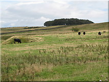 NY9569 : Rough pastures east of Keepwith Fell by Mike Quinn