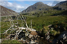 SH6360 : Dead tree in Nant Cywion by Philip Halling