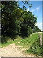 TG1334 : Public footpath leading north near Church Farm, Plumstead Green by Evelyn Simak