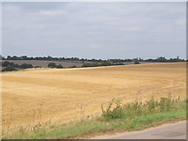 TM1453 : Large field by lane close to Hemingstone Church by Andrew Hill