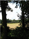 TG1440 : View west towards a shed at Lodge Farm by Evelyn Simak