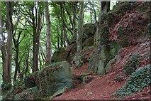 J4772 : Killynether Wood near Newtownards (3) by Albert Bridge