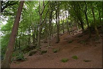J4772 : Killynether Wood near Newtownards (5) by Albert Bridge