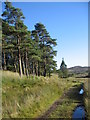 NS3063 : Small wooded area, Muirshiel. by wfmillar