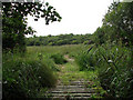 TG3316 : Path through the Bure Marshes National Nature Reserve by Evelyn Simak
