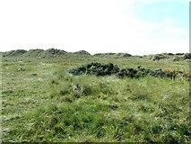 SH3568 : Overgrown sand dunes by James Allan