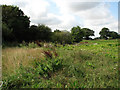 TG0236 : Field between Sharrington Road and the A148 by Evelyn Simak