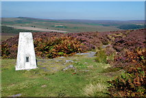 SK2773 : Trig Point in late summer by Roger Temple
