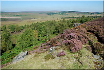 SK2773 : The northern end of Birchen Edge by Roger Temple