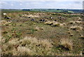 SK2771 : Cairns on Gibbet Moor by Roger Temple