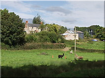 SJ2624 : Llamas in field by Whitehaven by John Haynes