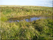 TA1281 : Small pond near North Cliff Country Park by Phil Catterall