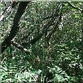 SX0854 : Valley Bottom Woodland by Tony Atkin