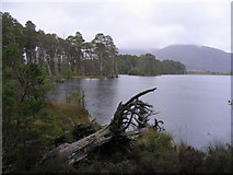 NH9617 : Caledonian pine forest and Loch Mallachie by M J Richardson