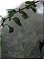 TG2425 : Heavy morning dew forming delicate beads of water on spider's web by Evelyn Simak