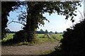 TF7217 : Farm Track (between East Winch & Gayton) by Robert Walden