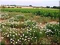 TL7197 : Farmland view by Lisa Wild