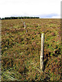 NY5685 : A line of old fence posts on Glendhu Hill by Walter Baxter