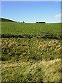 NT8629 : Footpath near Elsdonburn Shank by Phil Catterall