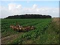 TG4325 : View towards Lambridge Covert by Evelyn Simak