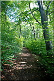 SK2572 : Woodland above Baslow by Roger Temple