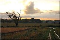 TL8063 : Little Saxham sunset by Bob Jones