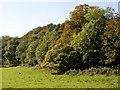 SN1023 : Trees above the flood plain, Llanycefn by Humphrey Bolton