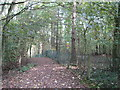SK1828 : Footpath in Brown's Coppice by David Stowell
