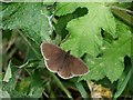 TF3465 : Butterfly at Old Bolingbroke by Dave Hitchborne