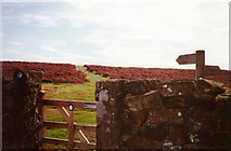 NZ5812 : Newton Moor by Graham Horn