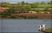 J1744 : The Corbet Lough near Banbridge (5) by Albert Bridge