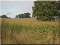 SJ5034 : Farmland north of Rack Lane by Peter Fleming